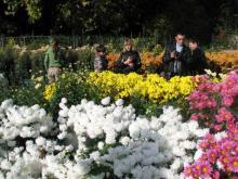 Бал хризантем 2012