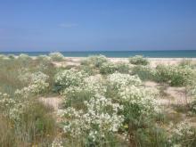 Бирючий остров. Степные травы