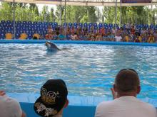 Дельфинарий в Скадовске